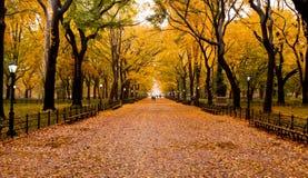 Depressione della traccia di autunno il parco fotografia stock