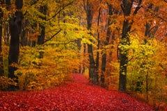 Depressione della traccia una foresta di autunno con nebbia Fotografie Stock Libere da Diritti
