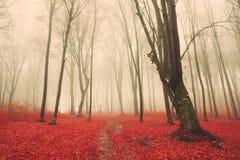 Depressione della traccia una foresta di autunno con nebbia Fotografia Stock