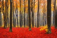 Depressione della traccia una foresta di autunno con nebbia Immagini Stock