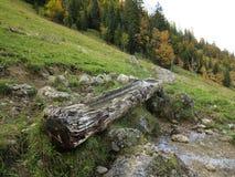 Depressione di legno del bestiame all'alpe Immagini Stock Libere da Diritti