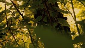 Depressione di Sun le foglie video d archivio