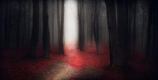 Depressione scura della traccia una foresta di autunno con nebbia Immagine Stock