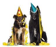 Depressives dogs wearing party hat and sitting in serpentine. Two depressives dogs wearing party hat and sitting in serpentines royalty free stock photography
