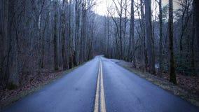 Deprimierende farblose Straßen-Fotografie im Wald Stockbilder