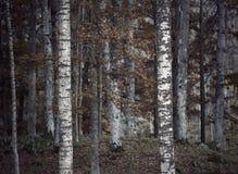 Deprimierender Herbstwald Lizenzfreie Stockfotos