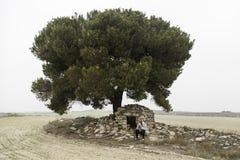 Deprimierte Frau im Baum Stockfoto