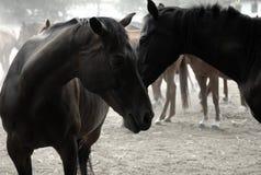 Deprimierte Pferde Stockfoto
