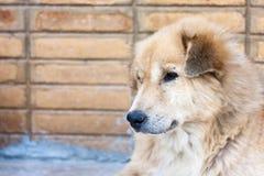 Deprimierter Hund Stockfotografie