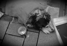 Deprimierter obdachloser Hund Stockfotos