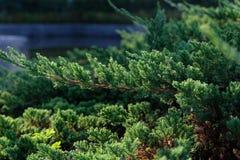 Dept поля и зеленого цвета стоковые изображения rf