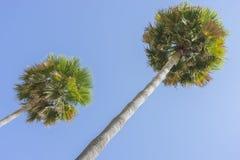 deptak wzdłuż morza palmy w Marbella Andalucia Hiszpania fotografia royalty free