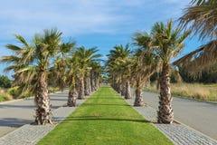 Deptak z drzewkami palmowymi zdjęcie royalty free