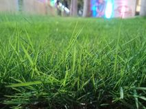Depth enabled poky grass royalty free stock image