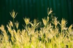 Depth of field the flower grass Stock Photos