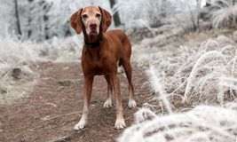 Depth of Field Photography of Brown Dog Near White Grasses Royalty Free Stock Image