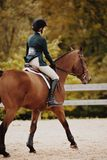 Depth of Field Photography of Woman Riding Brown Horse Stock Images