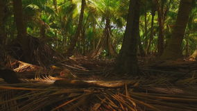 In the depths of the tropical forests of palm trees stock footage