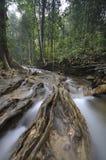 Der äquatoriale Wald mit Bäumen und Büschen Stockfotografie