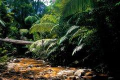 Der Überfluss an den oberen Reichweiten der Regenwaldtiere Chalerm Rattanakosin National Park in Kanchanaburi Lizenzfreies Stockbild