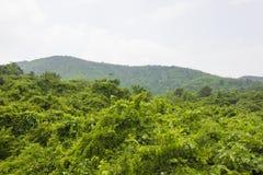 Der Überfluss am Wald auf dem Berg stockfotografie