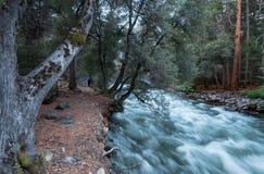 Der überschwemmte Merced-Fluss im Frühjahr stockfotografie
