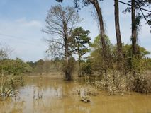 Der überschwemmte Süden lizenzfreie stockfotos