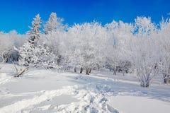 Der Abdruck auf dem Schneefeldsonnenschein Lizenzfreies Stockbild