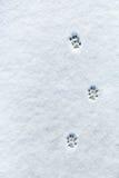 Der Abdruck der Katze im Schnee Stockfoto