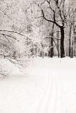 Der Abdruck der Skis auf dem Schnee im Winterwald an den eisigen Tagen des Sonnenuntergangs Bäume bedeckt im Frost und im Schnee Stockfotos