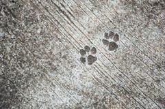 der Abdruck des Hundes aus den konkreten rauen Boden oder den Grund Lizenzfreie Stockfotos