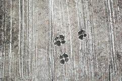 der Abdruck des Hundes aus den konkreten rauen Boden oder den Grund Stockbild