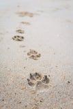 Der Abdruck des Hundes, der auf den Strand geht Lizenzfreies Stockfoto