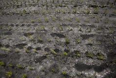 Der Abdruck des Landwirts auf dem bebauten Reisgebiet Lizenzfreie Stockfotografie