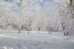 Der Abdruck und die weißen Bäume Lizenzfreie Stockfotos