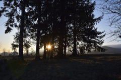 Der Abend, das Baumschattenbild Lizenzfreies Stockbild