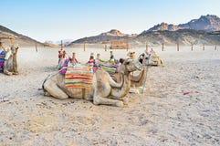 Der Abend in der Wüste Stockbild
