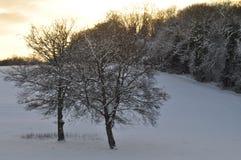 Der Abend des Winters Stockfoto