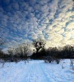 Der Abend im Winterholz Stockfotografie