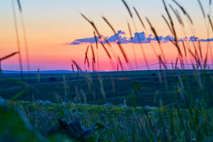 Der Abendhimmel auf Feldern Stockfotografie