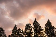 Der Abendhimmel und das Baumschattenbild Lizenzfreies Stockfoto