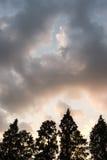 Der Abendhimmel und das Baumschattenbild Lizenzfreies Stockbild