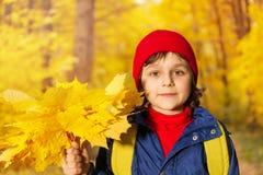 Der Abschluss des Jungen herauf Ansicht mit gelben Ahornblättern Lizenzfreies Stockfoto