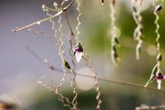 Der Abschluss herauf Blume Stockfoto