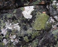 Der Abschluss herauf Moos auf der Felsenoberfläche Lizenzfreie Stockfotos