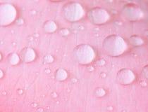 Der Abschluss herauf Wassertropfen auf rosa Blumenblatt, selektiver Fokus Lizenzfreie Stockbilder