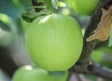 Der Abschluss oben des grünen Apfels Lizenzfreies Stockbild