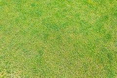 Der Abschluss oben des grünen Grases für Ihren Hintergrund Lizenzfreie Stockfotos