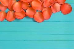 Der Abschluss oben von Blumenblättern der frischen Rosen auf Purpleheart, selektiver Fokus Lizenzfreies Stockfoto