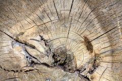 Der Abschnitt des alten Baumstammes Lizenzfreie Stockbilder